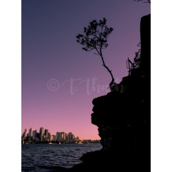 Sunset at Cremorne, Sydney Australia